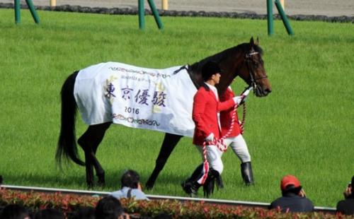 【競馬】総帥「マカヒキはキズナより劣る、今年は期待していない」