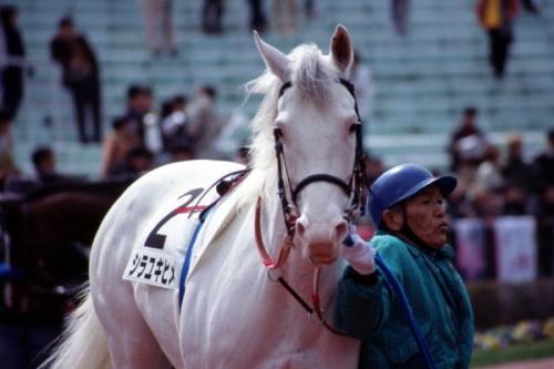 【競馬】シラユキヒメ一族が今後G1勝つ可能性.jpg