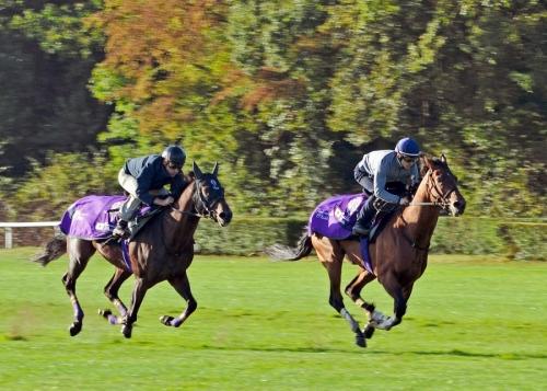 【凱旋門賞】ルメール「マカヒキ凱旋門賞勝てる。いっぱい自信ある。とてもいい馬。私シャンティイ競馬場分かる」