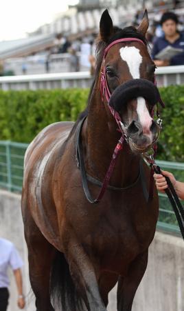 【競馬】土曜日のシリウスSが超G1級の面白いレースな件