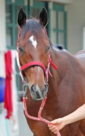 【競馬】リアルスティール毎日王冠回避