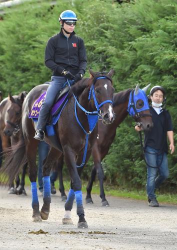 【競馬引退】ホッコータルマエが今年限りで現役引退、種牡馬入りへ