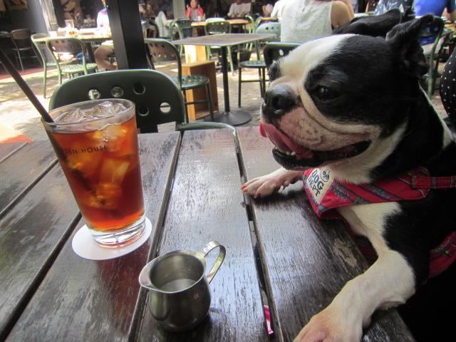 鎌倉のオシャレカフェとお犬さま ドッグOK