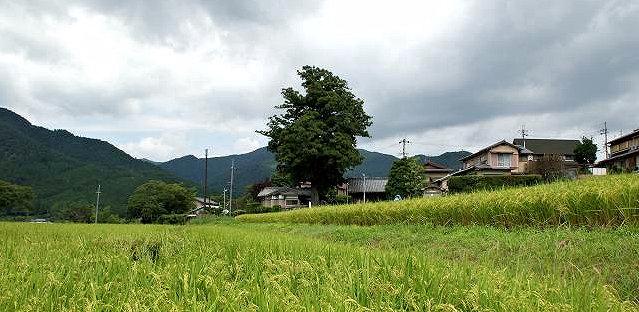 浄楽堂あたりの田園風景