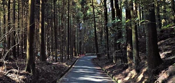 鬱蒼とした木々に囲まれた、般若寺への山道