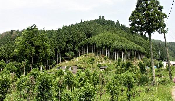 安楽寺から眺めた北山杉の山並み