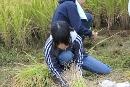 稲刈り (4)