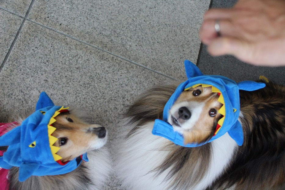 20160504-20サメ親子