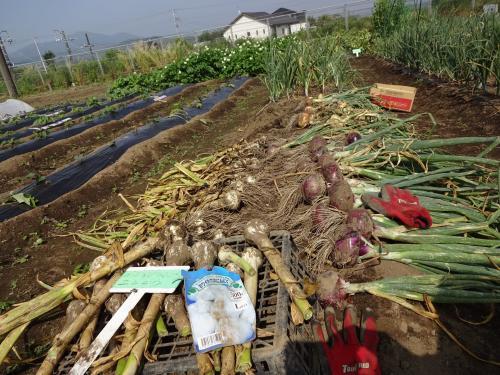 2016年 春野菜