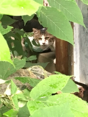 2016.8.21~22 美穂ちゃん 浪江・都路 9