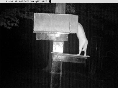 1(白猫)3 7月 2日  21時14分 PICT1177 ●