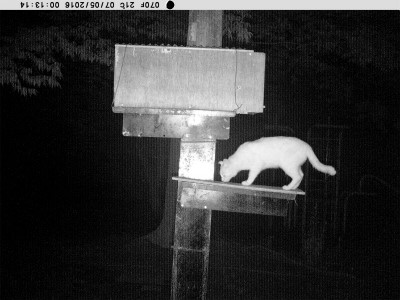 1(白猫)その5 7月5日 0時12~13分 PICT1280