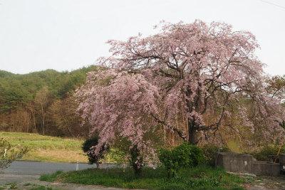 2016.4.26 葛尾村・都路 16
