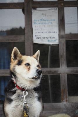 2016.4.26 葛尾村・都路 19