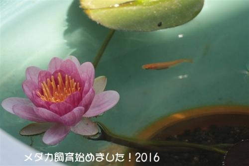 IMG_1960_20160513230130881.jpg