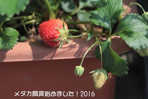 IMG_2792_20160529093015f71.jpg