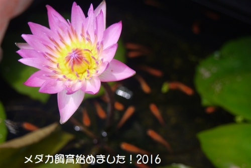 P1120693.jpg