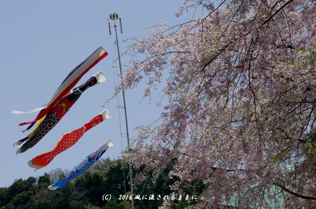2016年4月16日撮影 大阪・勝尾寺の桜5