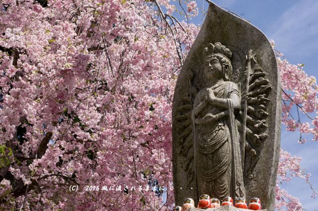 2016年4月16日撮影 大阪・勝尾寺の桜6