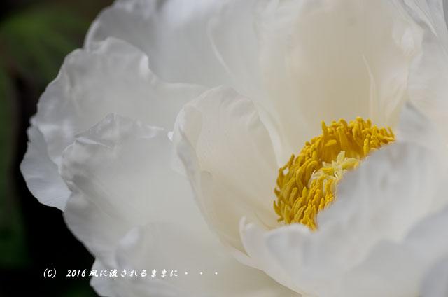 2016年4月23日撮影 奈良・岡寺 春の花14