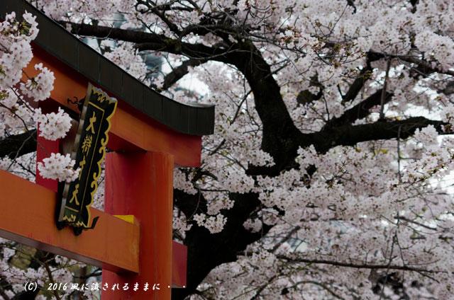 2016年4月2日撮影 大阪・四天王寺&てんしばの桜3