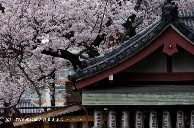 2016年4月2日撮影 大阪・四天王寺&てんしばの桜4