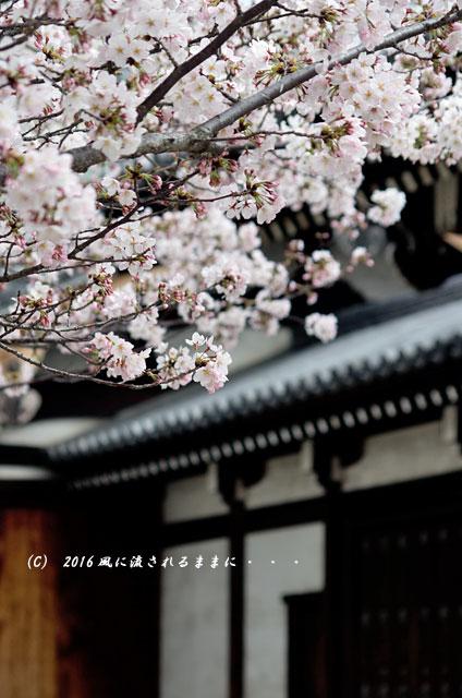 2016年4月2日撮影 大阪・四天王寺&てんしばの桜5