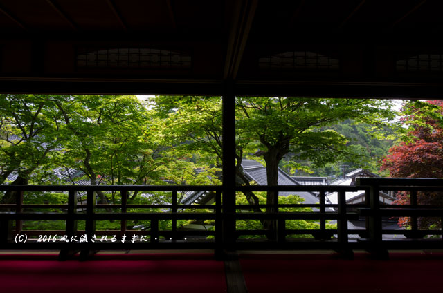 京都・柳谷観音 楊谷寺 上書院から見る浄土苑(名勝庭園)3