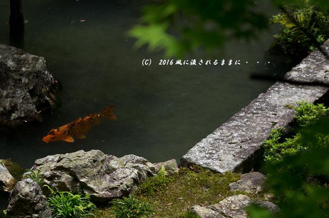 京都・柳谷観音 楊谷寺 上書院から見る浄土苑(名勝庭園)11