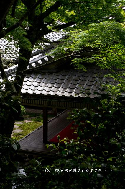 京都・柳谷観音 楊谷寺 上書院から見る浄土苑(名勝庭園)9