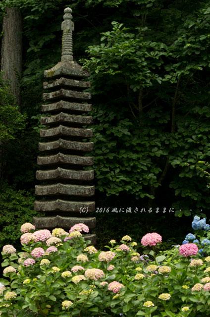 2016年6月12日撮影 京都・岩船寺 紫陽花の花10