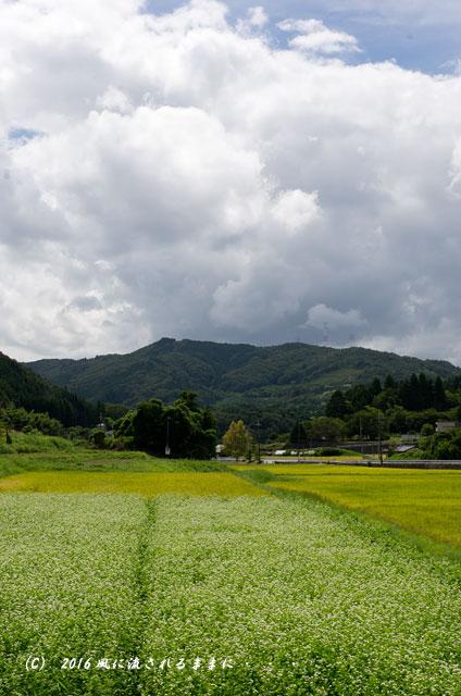 2016年9月4日撮影 京都・犬甘野(いぬかんの) 蕎麦の花5