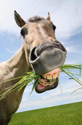 競走馬は何故、競馬場の馬場の草を食べないのか