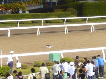 競馬 おもしろ画像33