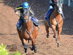 【NHKマイルカップ】須貝師「シュウジに1600mは長い。でも岩田騎手に何か秘策があるらしいよ」