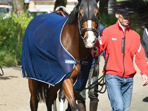 【ヴィクトリアマイル】ストレイトガール(牝7)藤原英師「もうオバサン。前走(阪神牝馬S9着)もその影響はあった」