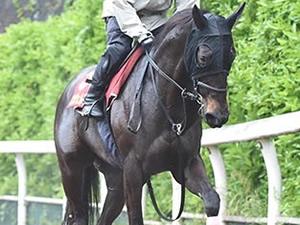 【優駿牝馬】エンジェルフェイス「逃げるしかない」
