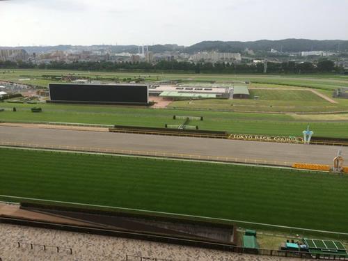 今週の東京競馬場の馬場情報教えます
