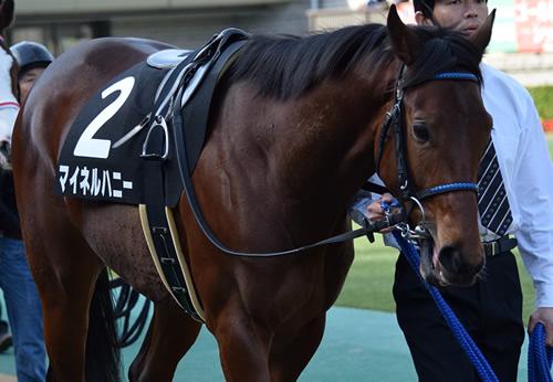 【東京優駿】絶好枠の逃げ馬マイネルハニーが大穴あける