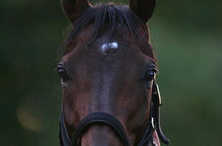 ディープインパクト産駒の牡馬が年々強くなっていってる件