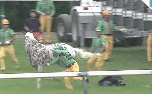 ブチコ、また放馬で競争除外