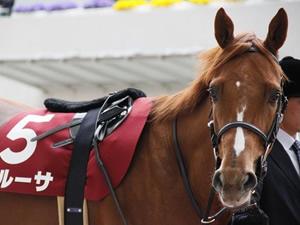 ゼンノロブロイ産駒のペルーサ、ルルーシュが引退…両馬とも種牡馬に