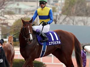 エアスピネル再来週に帰厩、神戸新聞杯から菊花賞へ