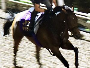 【凱旋門賞】マカヒキ、放牧しても馬体成長してなかった
