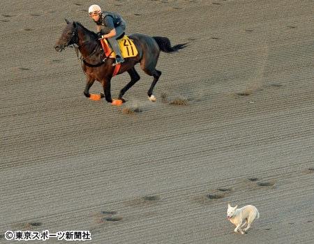 【画像】ワロタww美浦トレセンで犬と馬が併せ馬