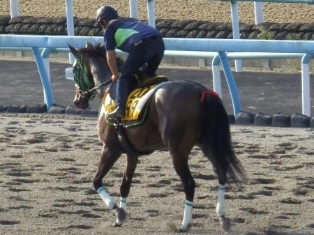 【毎日王冠】ルージュバックさん、大竹厩舎で体調を崩す