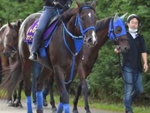 ホッコータルマエが今年限りで現役引退、種牡馬入りへ