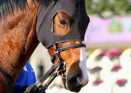 【悲報】三冠馬オルフェーヴルの全弟リヤンドファミユ 障害に転向