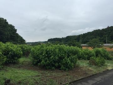 小川町 四津山神社コース3