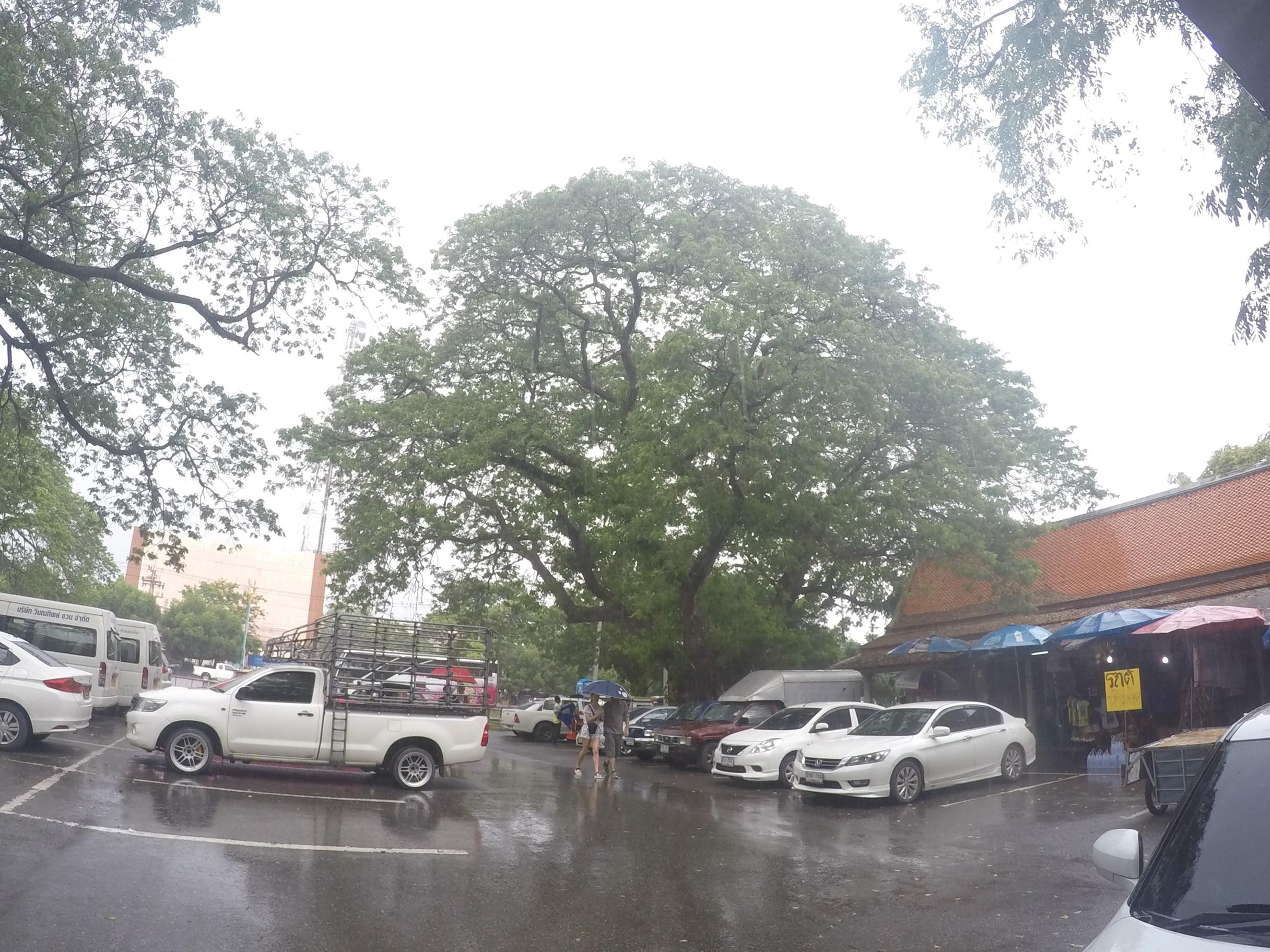 アユタヤ・雨